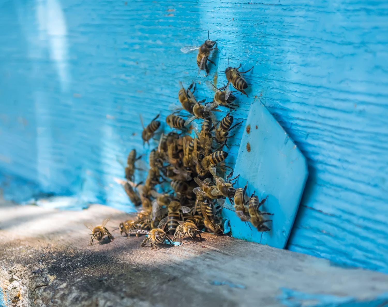 Viele Bienen als Verbildlichung des Schwarmsystems.